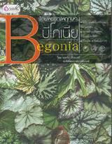 ร้อยพรรณพฤกษา : บีโกเนีย Begonia